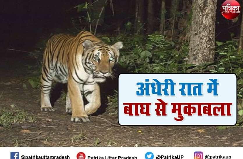 Tiger Attack : बिजली सी कौंधी और धम्म की आवाज के साथ टूट पड़े दो बाघ