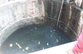 दतिया : चंदेबा की बावड़ी में मरी मछलियां, लोगों में मचा हड़कंप