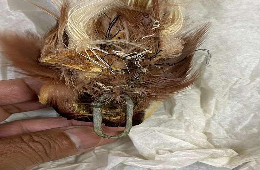 Bird smuggling: सोने के बाद अब देश में हो रही है बर्ड तस्करी