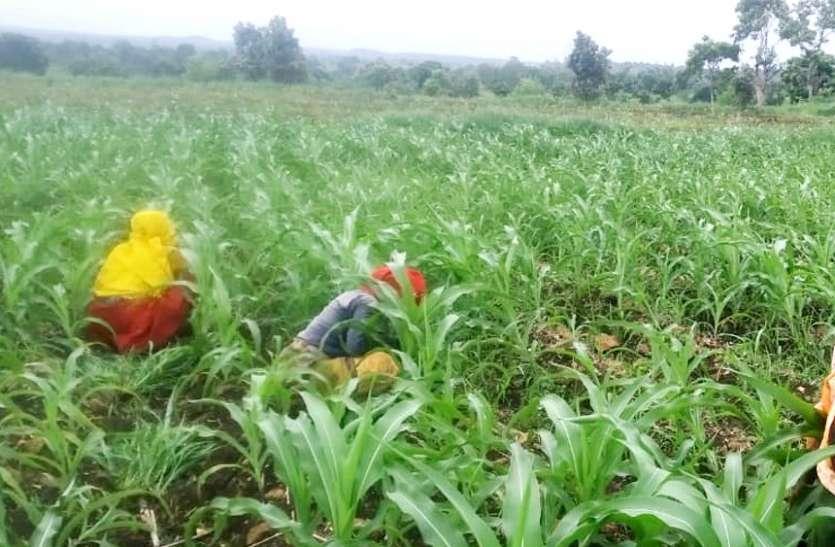 सोसायटी में यूरिया का स्टाक नहीं, चक्कर काट रहे किसान
