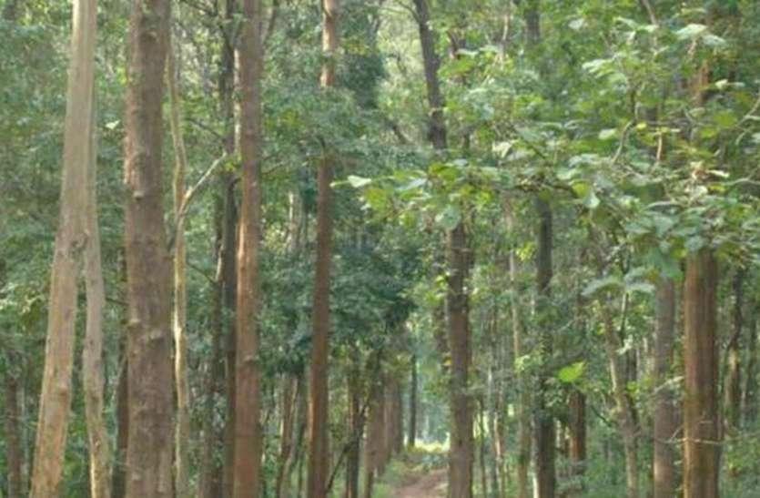 अधिक लाभ के लालच में सागवान के वृक्ष उगाना ठीक नहीं