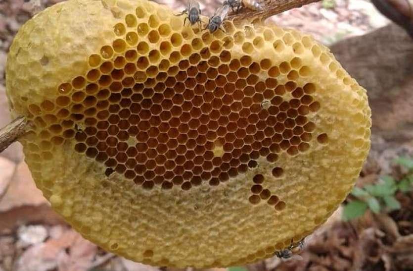 पौष्टिक शहद को तरसा गईं मधुमक्खियां