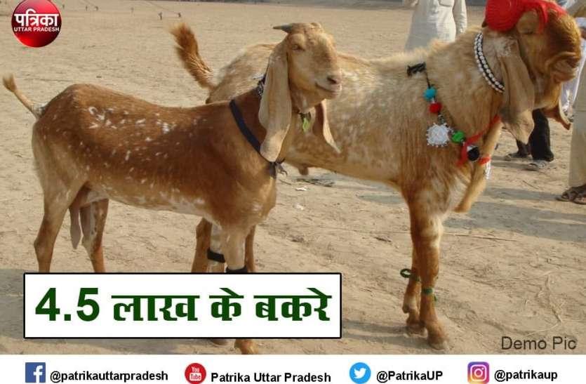 Eid al-Adha : 4.5 लाख में बिके दो बकरे, खाते हैं बादाम पिस्ता और पीते हैं अनार-मोसम्मी का जूस