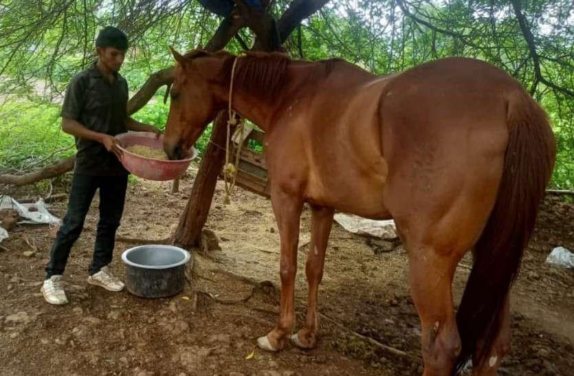 MP Ajab Hai सफेद हाथी पालने से भी महंगा पड़ रहा लाल घोड़ा