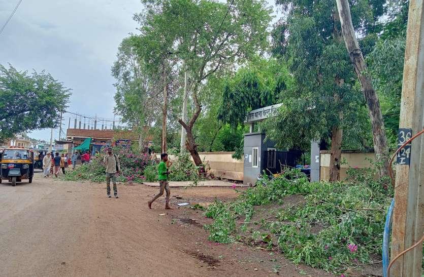 कृत्रिम सुंदरता के लिए प्राकृतिक सुंदरता की बलि, कैंट थाने के सामने हरे-भरे पेड़ काटे