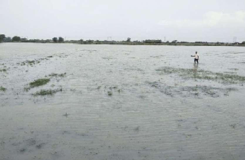 सैकड़ों बीघा खेत जलमग्न: किसानों ने सर्वे करवाकर मुआवजा दिलाने की उठाई मांग