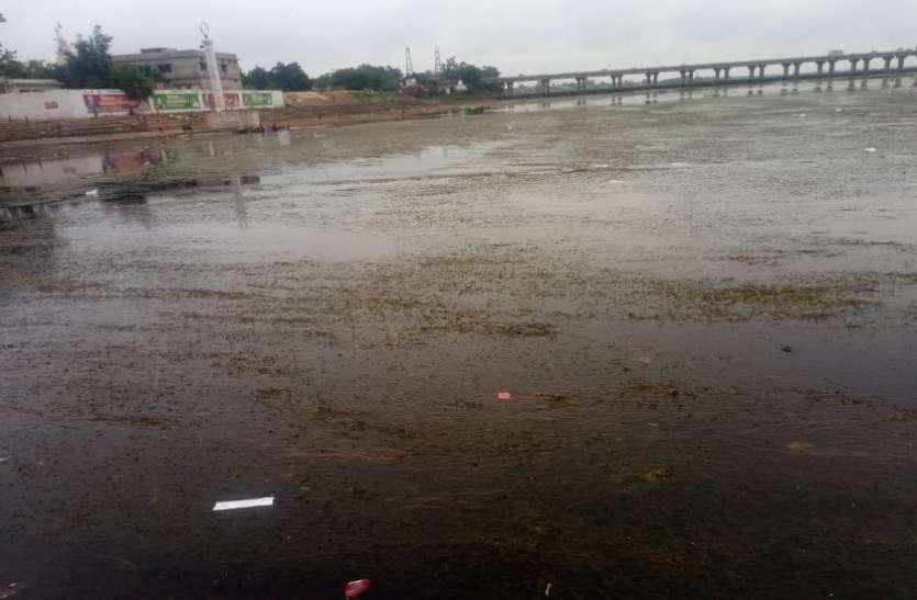 राजिम त्रिवेणी संगम का पानी प्रदूषित, आचमन के लायक भी नहीं रहा