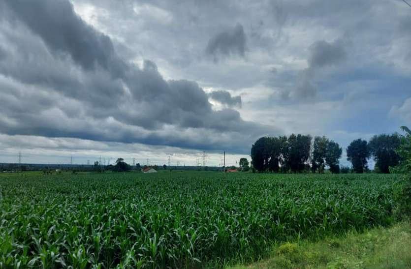सुबह से शाम तक हुई बारिश, किसानों के खिले चेहरें, फसलों को मिली संजीवनी