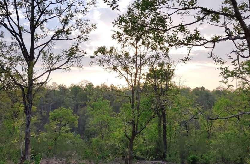 बक्स्वाहा के जंगल बचाने अब अंतरराष्ट्रीय पर्यावरण संरक्षण मंचों से लगाई गुहार