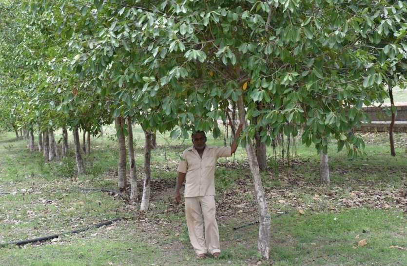 Gujarat: तीन दोस्तों ने मिलकर अपने गांव में लगाए 3 हजार पेड़, आज पूरे गांव में हरियाली