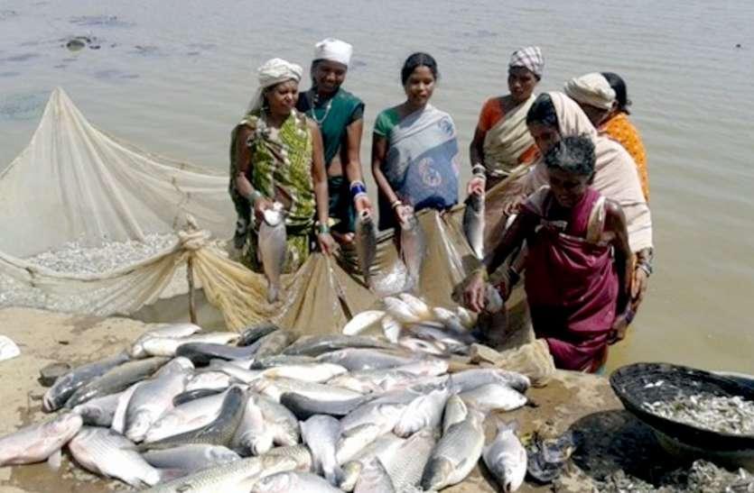 छत्तीसगढ़ में मछली पालन को कृषि का दर्जा
