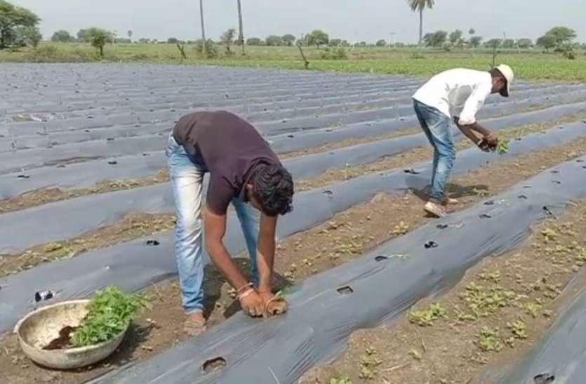 कांठल में बढ़ रहा स्मार्ट कृषि का चलन