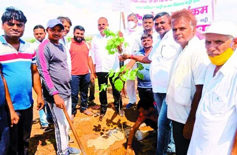 जोरे का पुरा में बनाई गांधी वाटिका, 200 पौधे लगाए