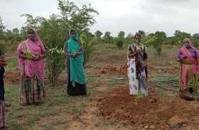 सीताफल की खेती से बढ़ेगी पंचायत की आय