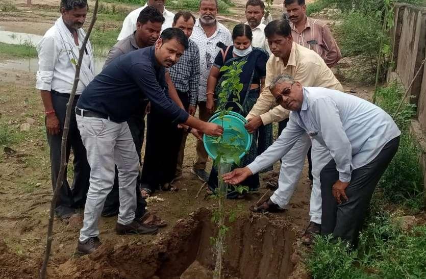विकसित होगी गांधी वाटिका, हरियाली से संवरेगा औद्योगिक क्षेत्र