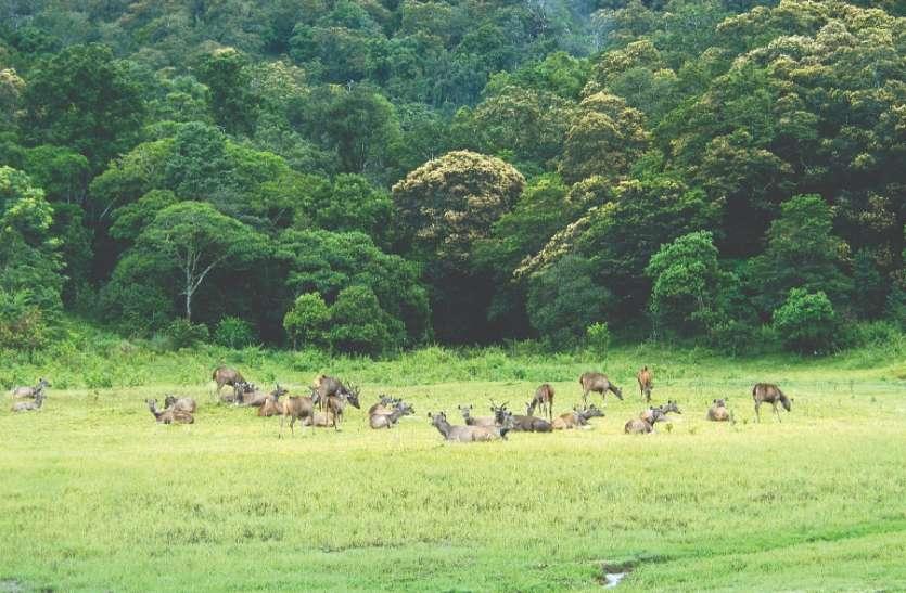 वन्य जीवों के संरक्षण के लिए क्या किया जाना चाहिए?