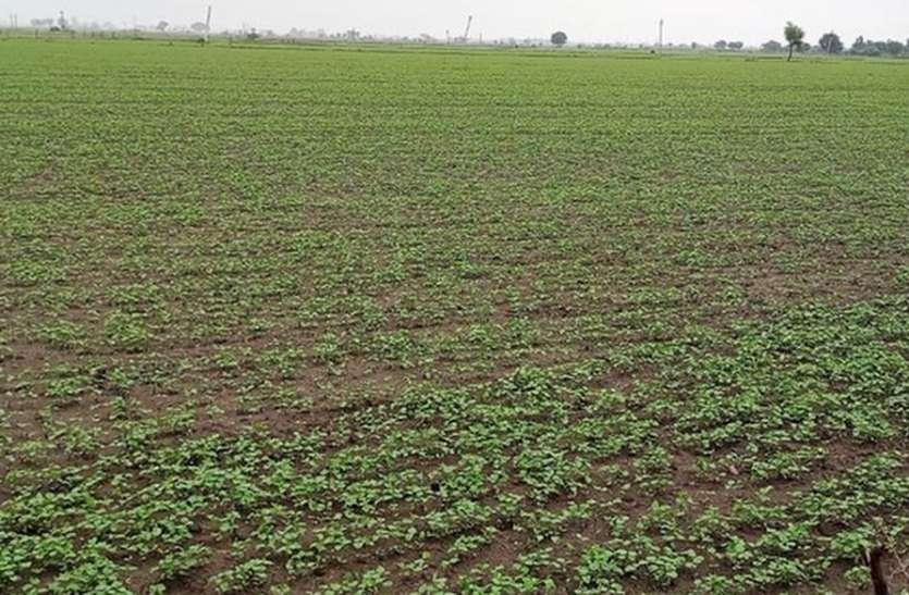 खेती-किसानी: मानसून की ढिलाई से अटकी खरीफ की बुवाई