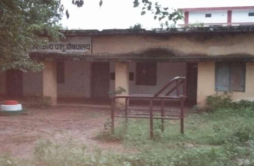 छत्तीसगढ़ के प्रथम शहीद के गांव में पशु औषधालय में संचालित हो रहा शासकीय कालेज