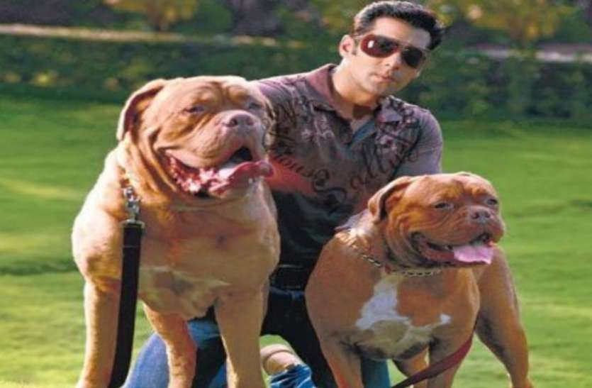 Bollywood celebrities with pet dog