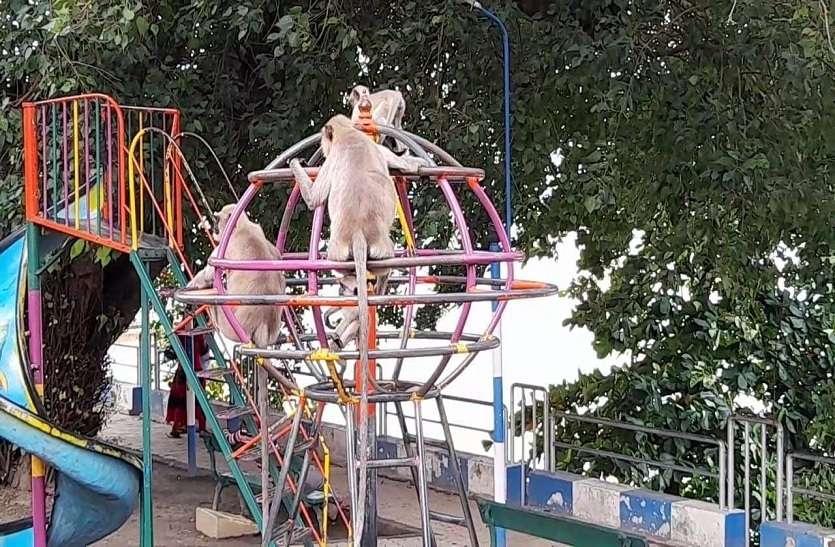 मनोरंजन पार्क में  बंदरों का कब्जा
