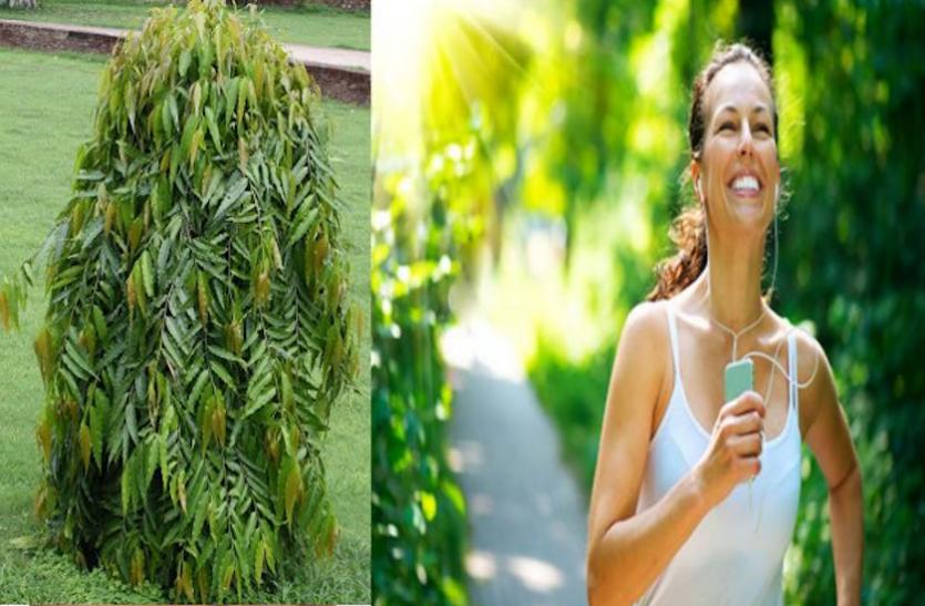 Health News: कई सामान्य बीमारियों में फायदेमंद है अशोक का पेड़, जानें कैसे करें इस्तेमाल