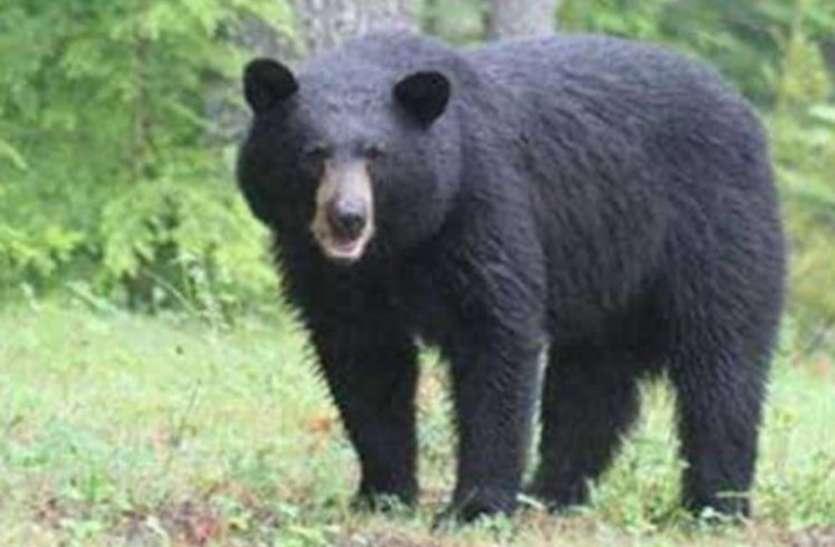 Quick Read: ललितपुर जिले में बनेगा देश का पहला रीछ-भालू संरक्षण केंद्र