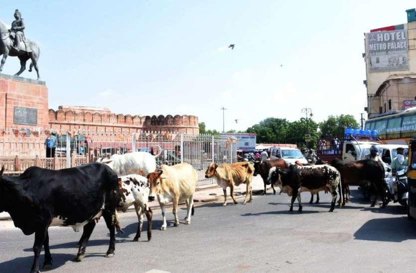 140 बीघा में निगम की गौशाला, 15 हजार पशुओं की क्षमता, एक साल से एक भी पशु नहीं