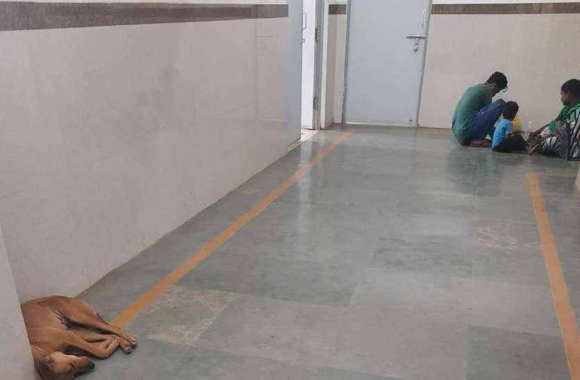 मदर-चाइल्ड हॉस्पिटल, दुर्ग में अव्यवस्था, कुत्ता कर रहा आराम