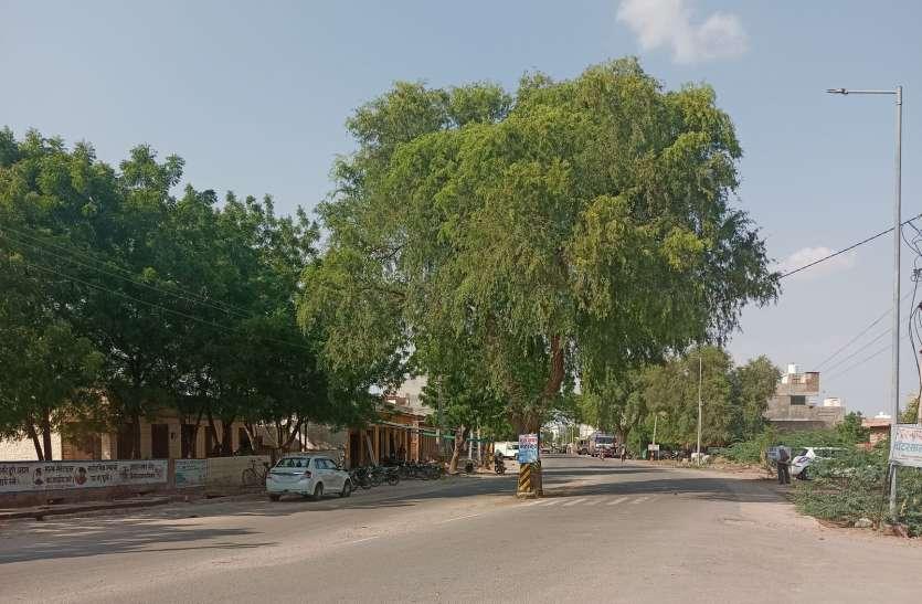 सड़क के बीचोंबीच लगे पेड़ का नहीं है संकेतक बोर्ड, हादसे की आशंका