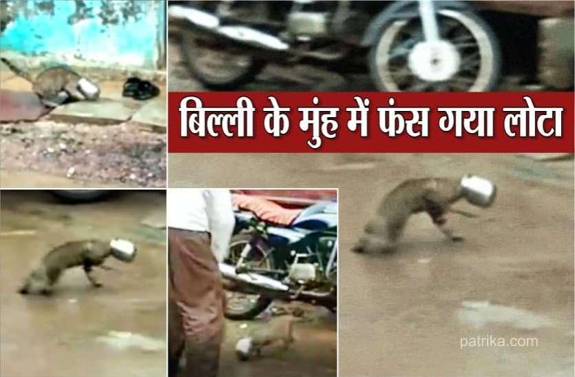 दूध पीने बिल्ली आई मुहं में फंस गया लोटा, पूरे गांव में लगा दी दौड़, देखें Video