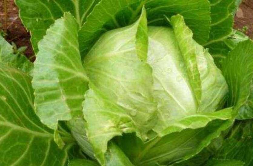 Vegetables For Diabetes: ब्लड शुगर के लेवल को कंट्रोल करने में फायदेमंद हो सकती हैं ये सब्जियां