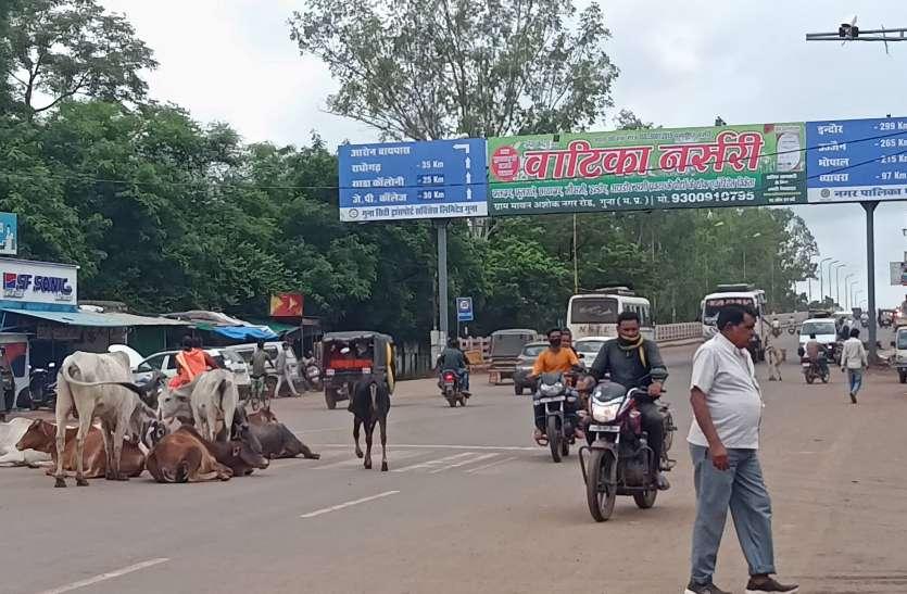 पत्रिका बिग इश्यू :शहर में बढ़ता अतिक्रमण, सड़क पर जानवर, बेतरतीब पार्किंग ने आवागमन किया मुश्किल