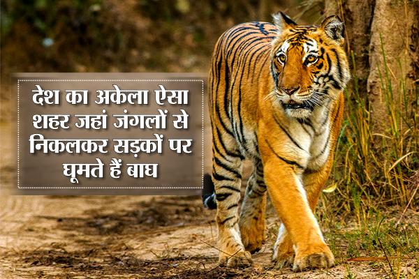 tiger-.png