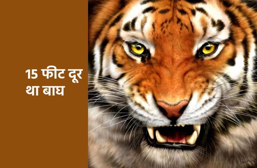 टाइगर ने किया शिकार, खींचकर जंगल में ले गया, वीडियो हुआ वायरल