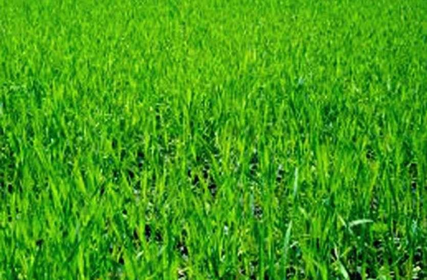 Health Tips: ताजा हरी दूब शरीर को रखती है दुरुस्त