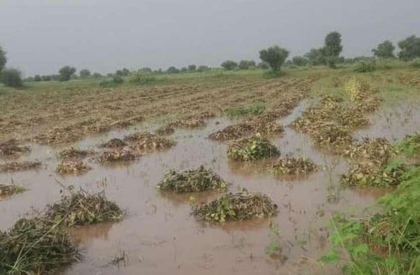 किसानों के अरमानों पर फिरा बारिश का पानी