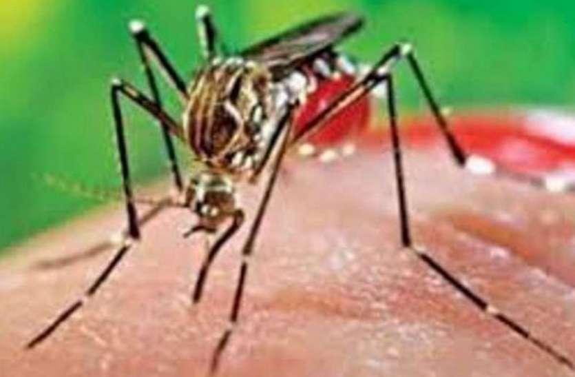 रोजाना आ रहे डेंगू के मामले