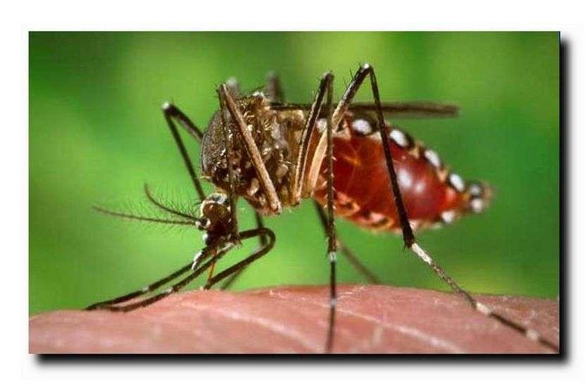 आप डेंगू पीडि़त हैं तो हो जाइए सावधान; क्योंकि झुंझुनूं में नहीं है प्लेटलेट्स चढ़ाने की सुविधा