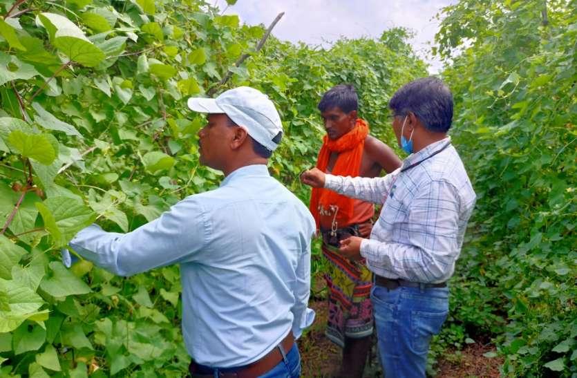 काटवल की खेती कर १५ से २० हजार कमा रहे बैगा आदिवासी