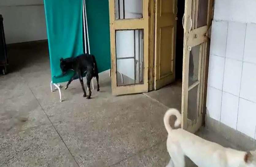 हजारों के जिंदगी से खेल रहा स्वास्थ्य विभाग, वार्ड में घूमते हैं कुत्ते, गंदगी का अंबार