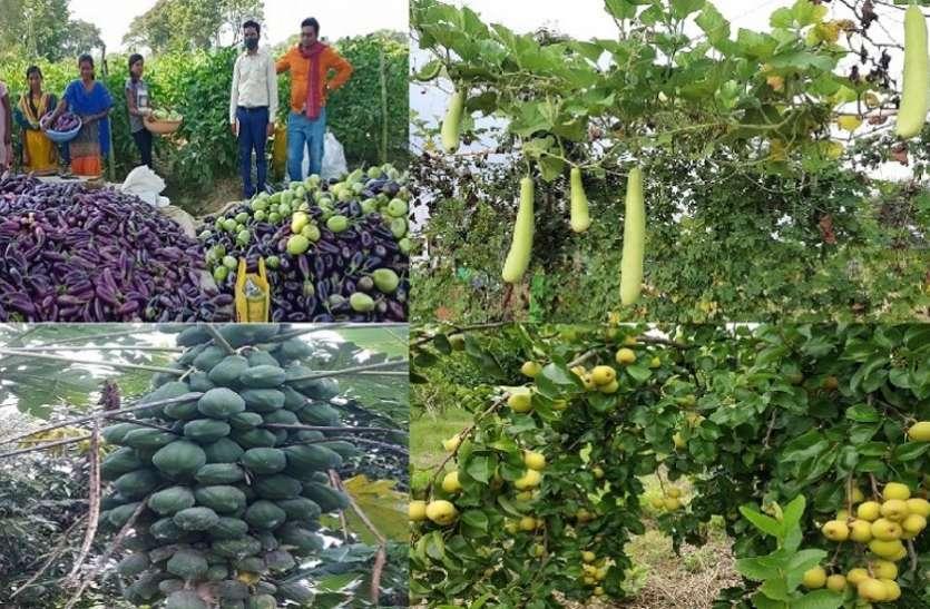 उद्यानिकी फसलें भी अब 'न्याय' के दायरे में, फल-फूल, सब्जी और मसाले की खेती करने वालों को मिलेगी सब्सिडी