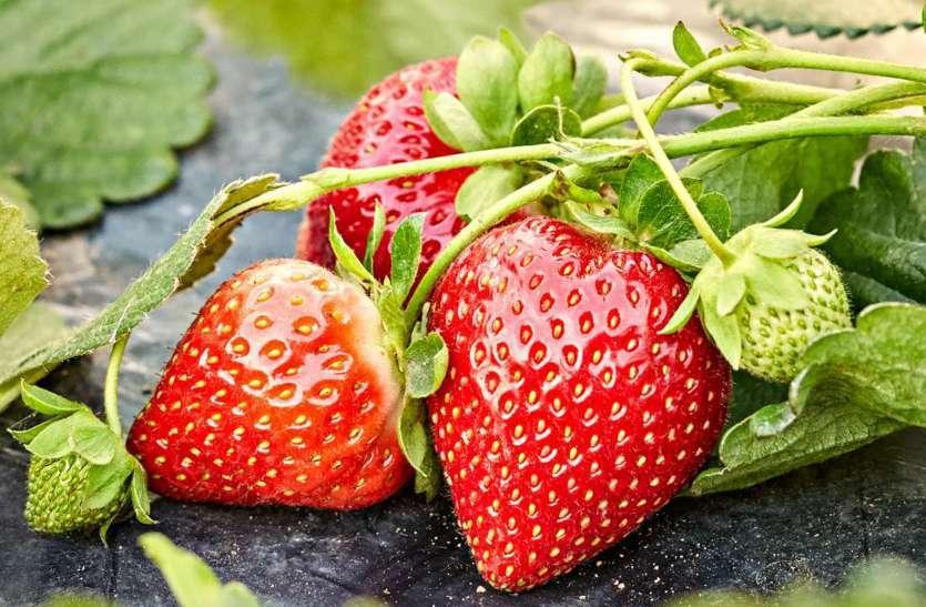 Antioxidants Rich Food: एंटीऑक्सीडेंट्स से भरपूर इन फूड्स को आपको अपनी डाइट में जरूर शामिल करना चाहिए