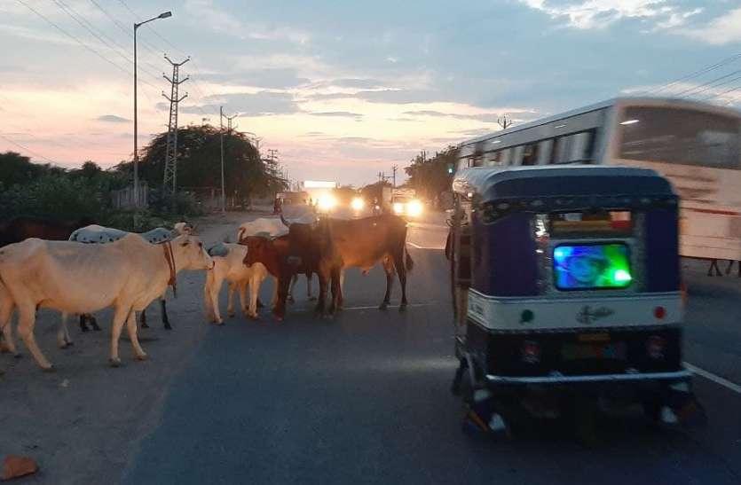 7 सालों में एक दर्जन से अधिक की जान ले चुकी 6 किमी की सड़क