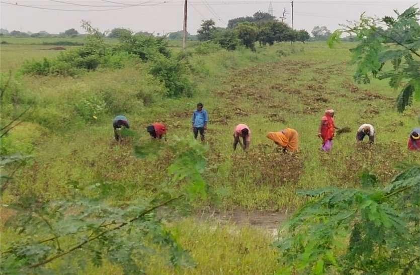 किसानों की आय दोगुनी करने साथी  तैयार करेगा नेफेड