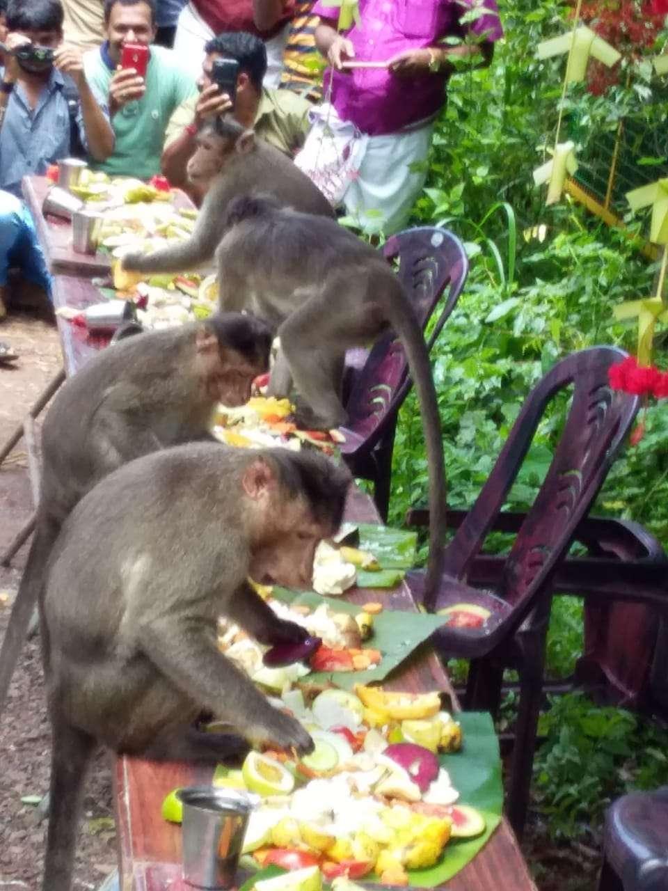 monkey_buffet.jpg