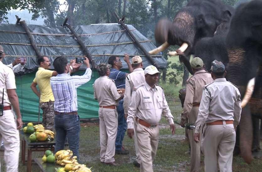 कान्हा नेशनल पार्क में हाथी महोत्सव शुरू