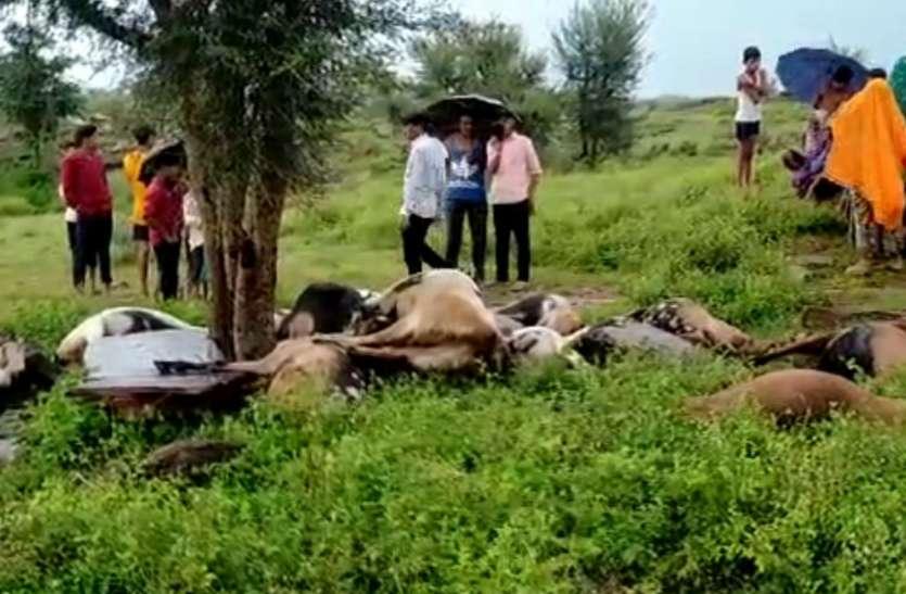 जंगल में चरती बकरियों पर  आसमान  से बरपा मौत का कहर