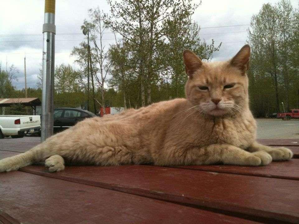 stubbs-cat.jpg