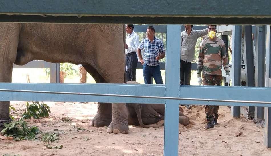 elephants death