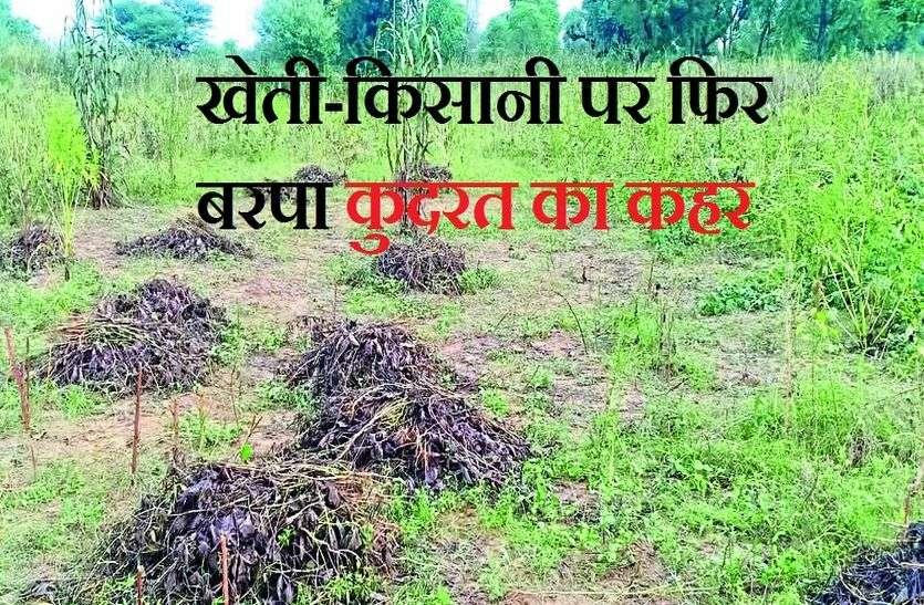 फसलें तबाह, किसान बेबस, राम रूठा अब राज से उम्मीद